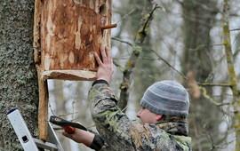 Новгородский Центр защиты леса